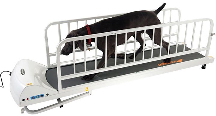 GoPet Treadmill for Big Dogs